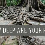 how-deep-are-your-roots