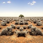 barren desert tree